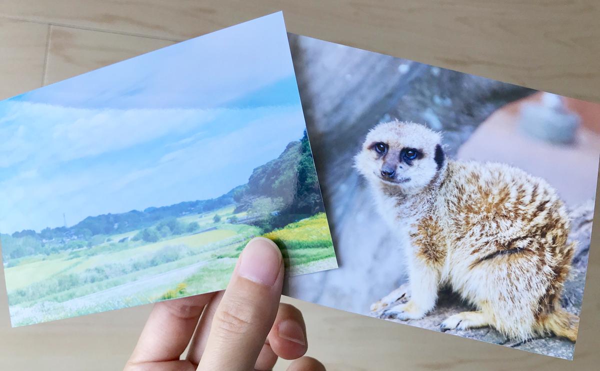 しまうまプリントで印刷した写真